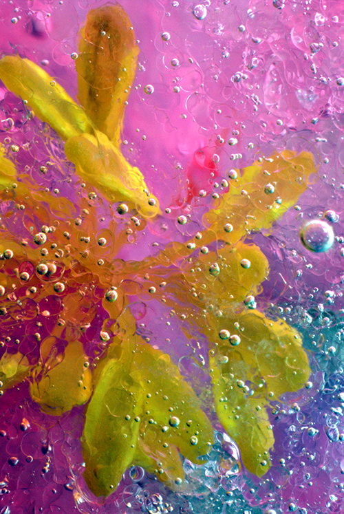 ghiaccio fiori natura macro flower ice