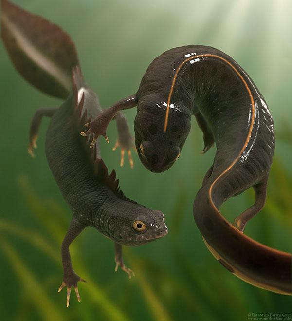 newts amphibians biology zoology app science Education scientific illustration