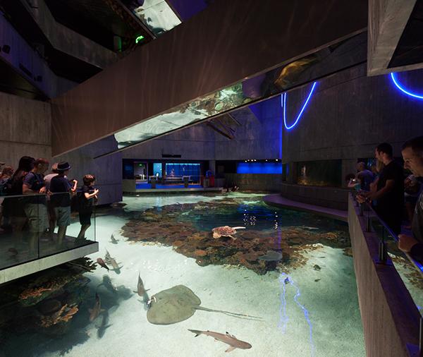 Exhibition Stand Water : National aquarium blacktip reef exhibits on risd portfolios