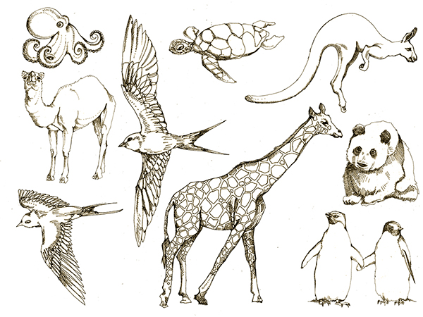 Line Drawings Animals Wildlife : Animal drawings on behance