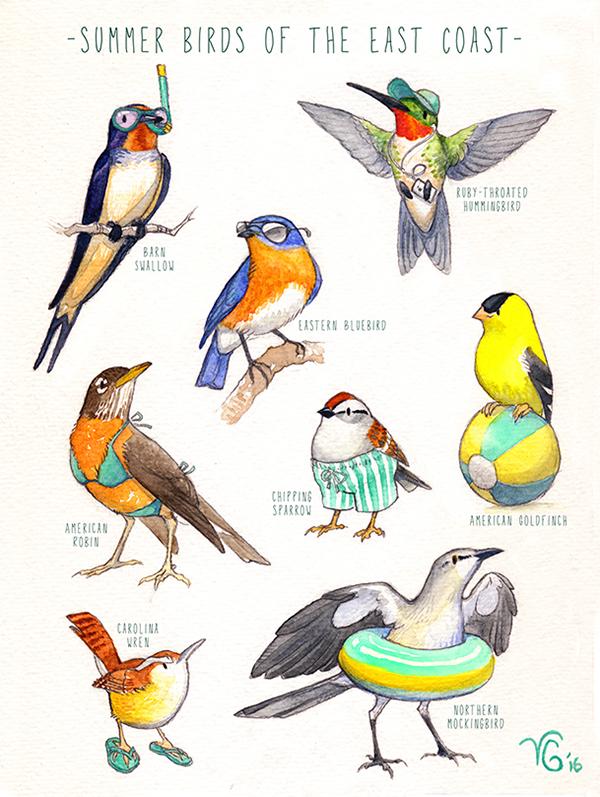 Seasonal East Coast Birds on SCAD Portfolios