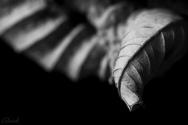 Black And White Macro Flower Photography Macro Photography Black And