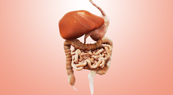 How to Burn Fat for Human digestive system animation video free download