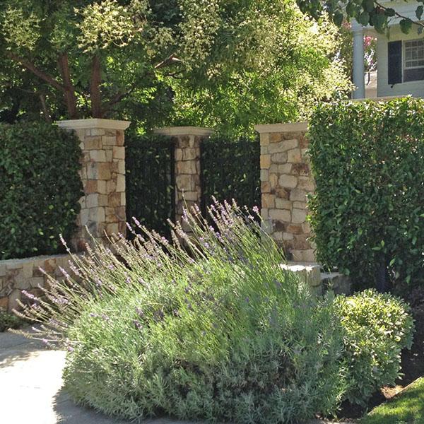 Estate garden beverly hills on risd portfolios for Estate landscape design