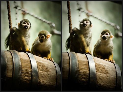 animals,Nature,wildlife,zoo,berlin zoo,berlin,Captivity,dark,Sadness,cage,canon 5D,retouch,photoshop,Editing