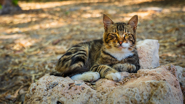 The cats of Paphos (Cyprus)