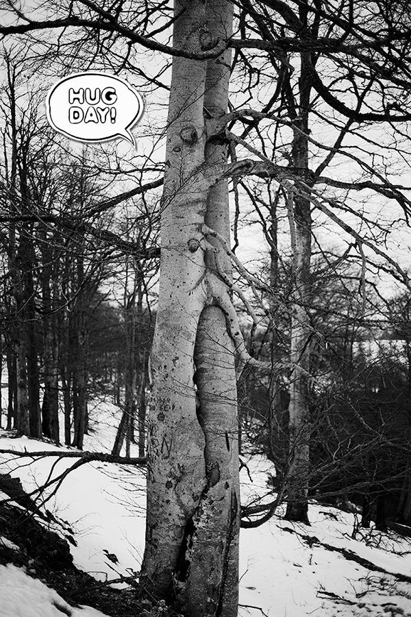 Nature Tree  hug