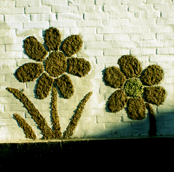 flower moss graffiti