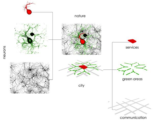Urban Concept Neurons Concept of Urban