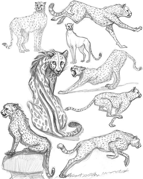 Chester Cheetah Illustrations On Behance: Cheetah Character Design Process On Behance