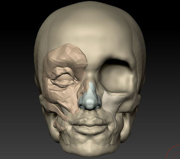 Facial Anatomy in ZBrush and Clay on RISD Portfolios