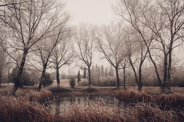 photo  nature fine art frozen trees intimacy