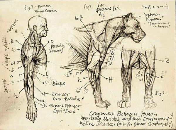 Anatomical Studies (to be Updated) on Behance