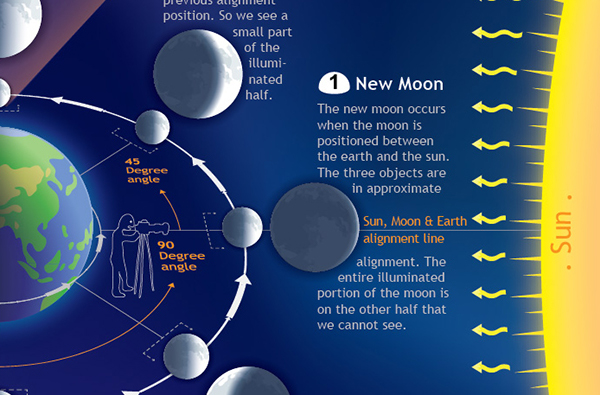 Phases Of The Moon (Educational Poster) / $26.00