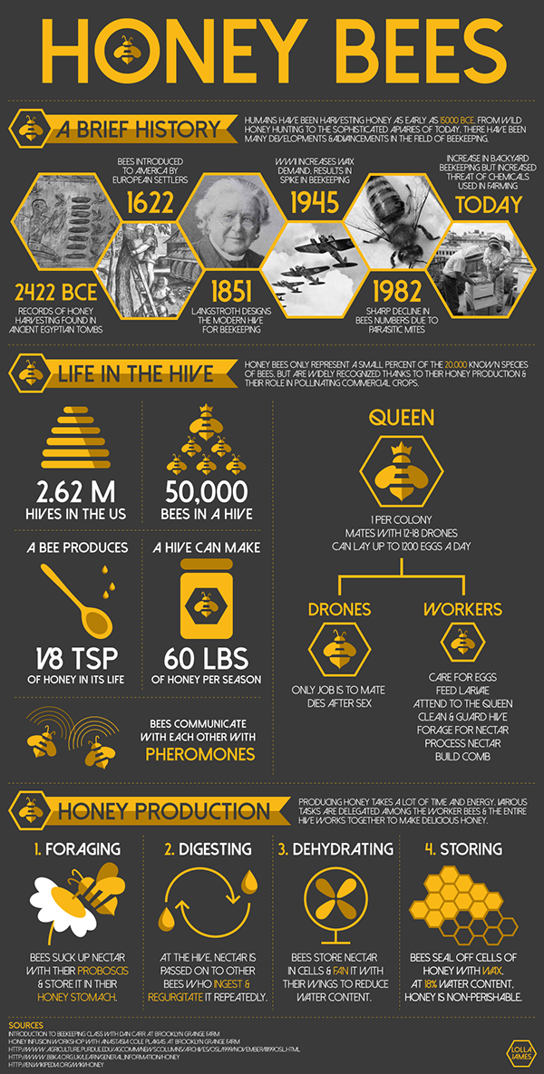 infographic bees honey Icon science Nature yellow information flat simple numbers