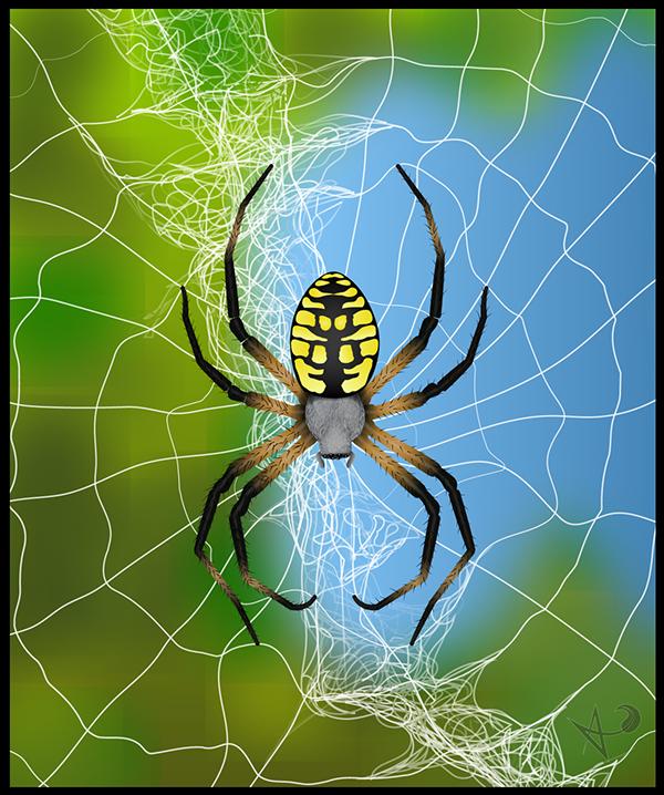 arachnids spiders