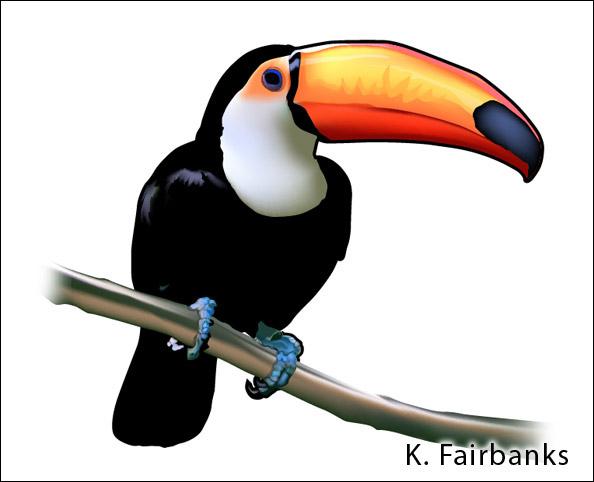 Toucan Bird Drawing Toucan - Vector Drawin...