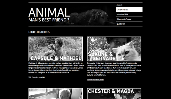 documentaire Documentary  animal chien Chat dog Cat abuse