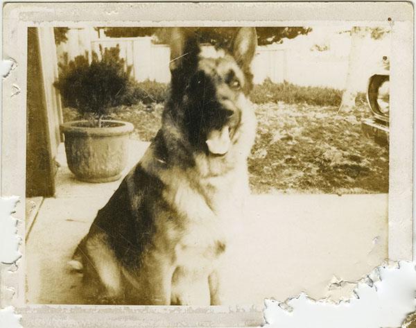 restoring dogs