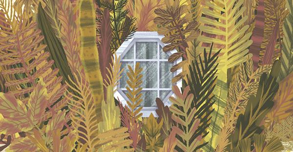 ilustration plants Plant Window windows home Nature
