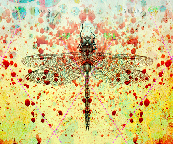 Insects Morphology symmetry