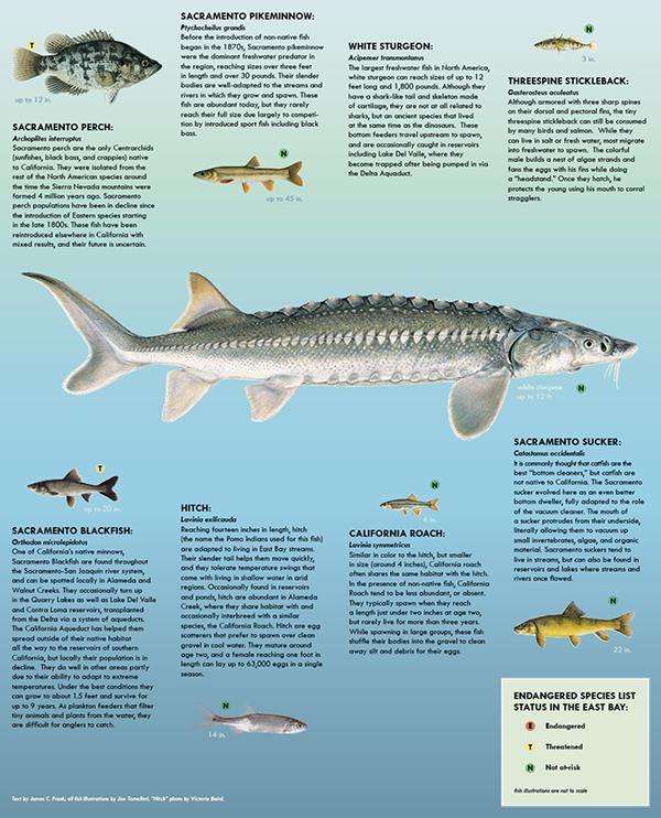 Native Freshwater Fish Brochure on Behance