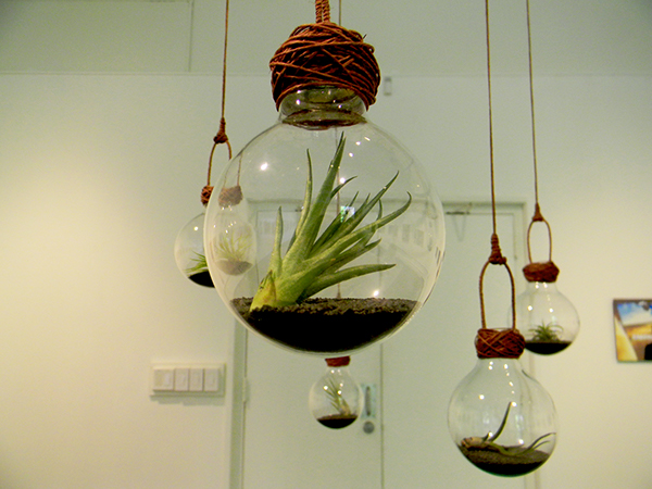 Air plant art on behance for Air plant art