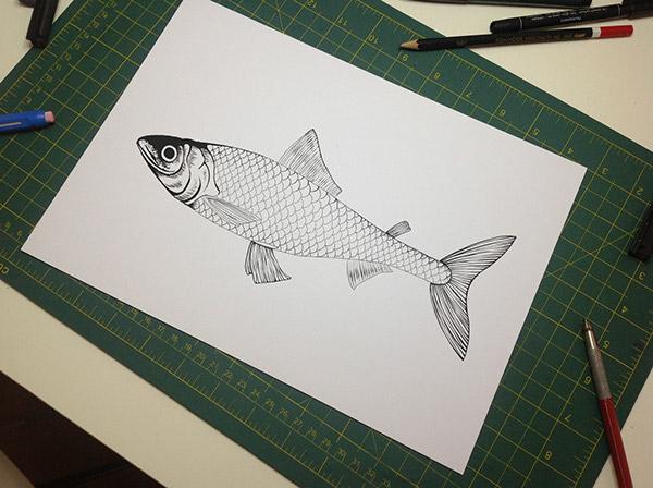 Coregonus lavaretus coregona fish decoration Enzo Benedetto seadream