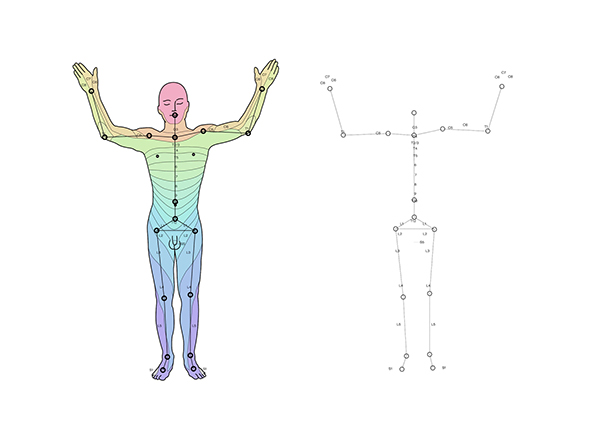 Dermatomes spinal cord pain distribution on behance