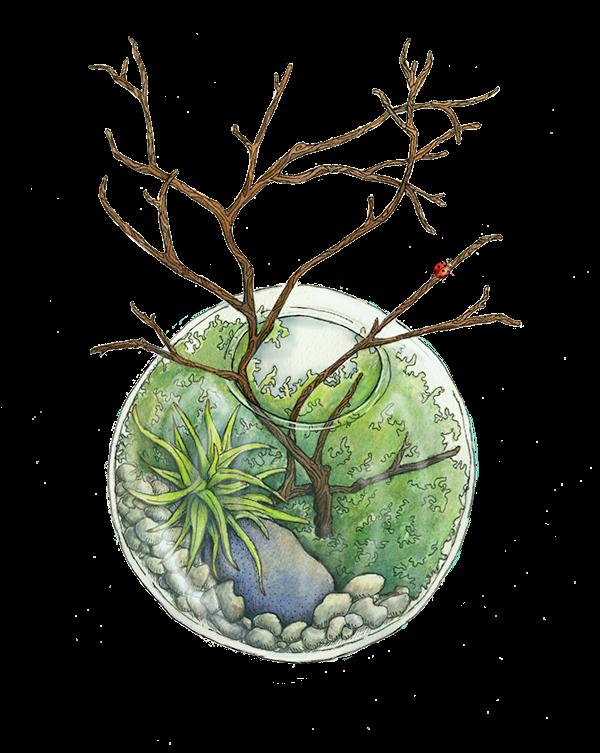 terrarium,plants,gardening,watercolor,ink
