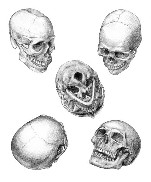 картинки черепа со всех сторон конструированию бумаги летучая