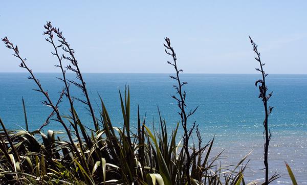 new-zealand New Zealand NZ Nature Landscape north island south island nature photography digital Aoteroa