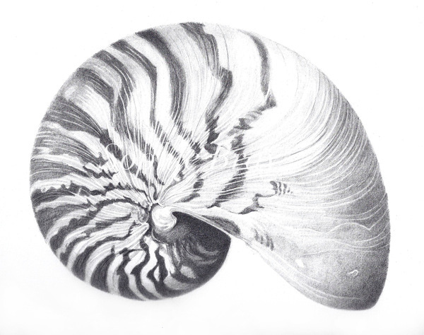 Shells on Behance
