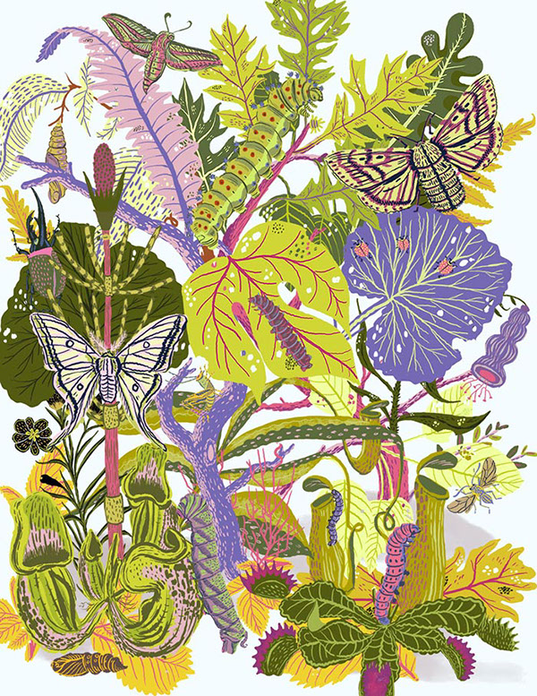 Colourful illustration of different leafy plants. Ladybugs, moths, cocoons and caterpillars camouflaged in amongst the plant material.
