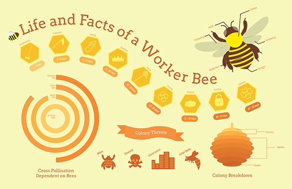 Worker Bee Infographic On Behance