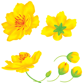 Hoa mai - Apricot blossom on Behance