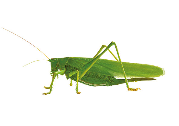 Image may contain: insect, animal and green
