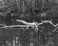 florida Everglades glades b&w landscapes
