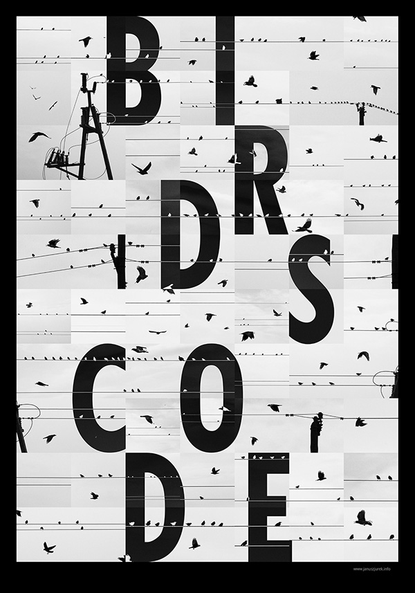Bird's code  on Behance