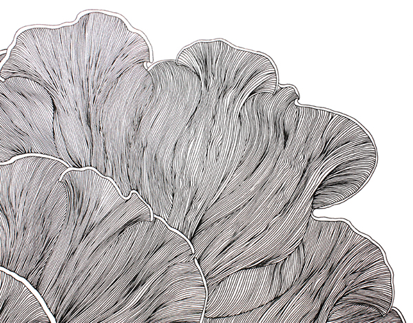 Fine Line Design Art Gallery : Fine line drawing pattern design on behance