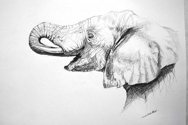 Dessin D Un Éléphant dessin d'elephant on behance