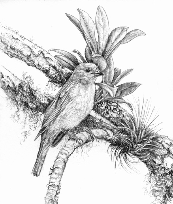 Birds - pencil drawings 2 on Behance