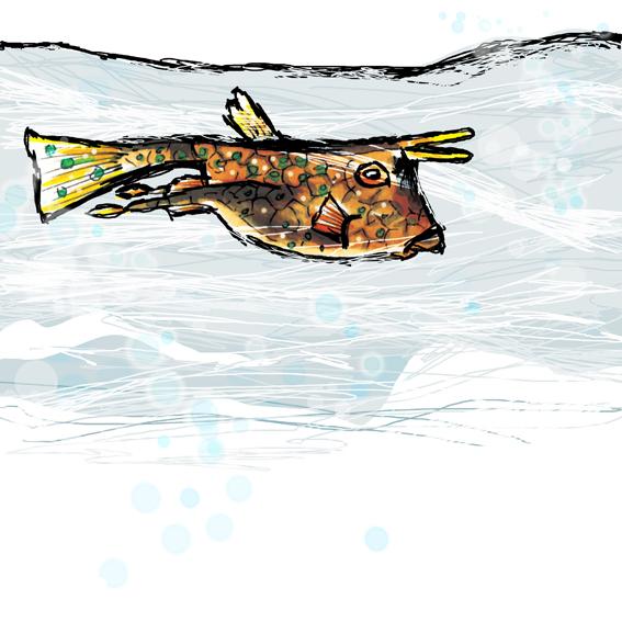 fish,scratchy,windy,Mushrooms,winter,fawn,FOX