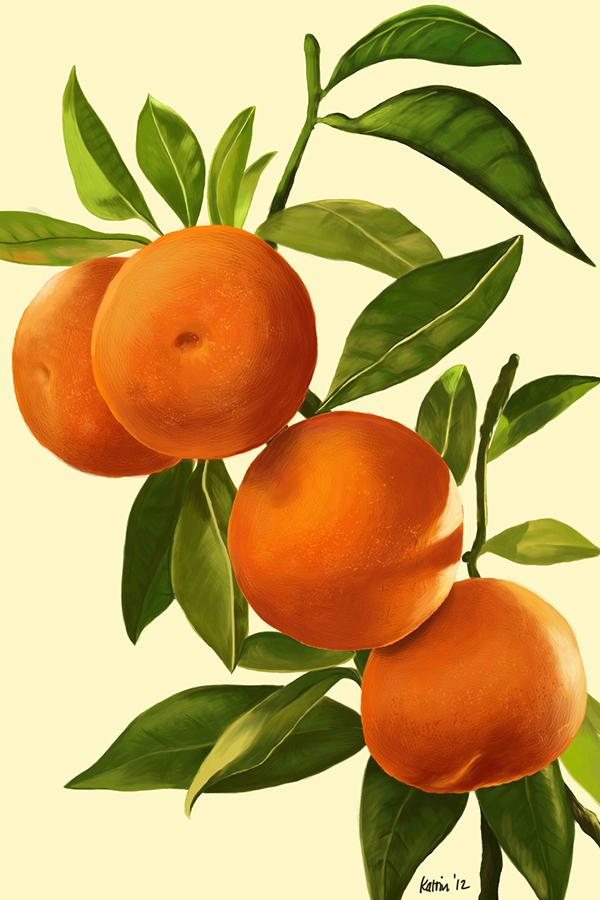 digital painting photoshop citrus agrumi Katrin