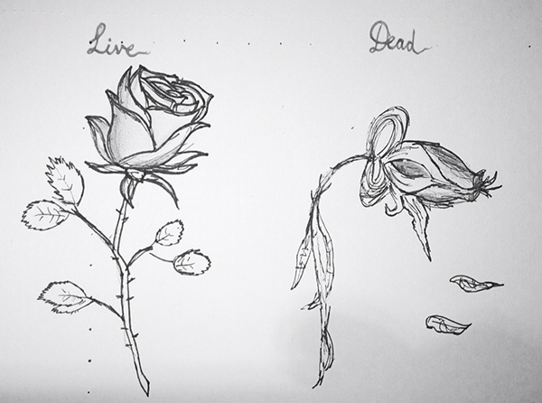how to draw a pretty rose easy