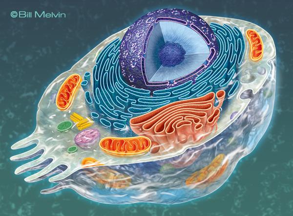 BIOLOGY ART on Behance Cell Biology Art