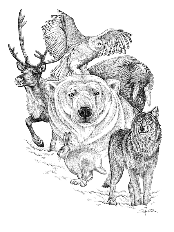Line Drawings Animals Wildlife : Pen and ink on behance