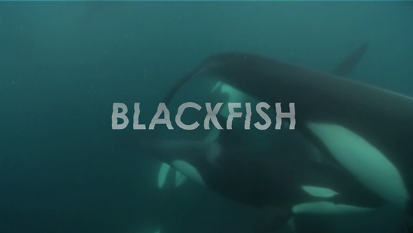 blackfish essay fd Blackfish analysis: misleading and/or inaccurate content 1075200002/2087691 1 no time stamp description misleading and/or inaccurate 1 :01-- 1:13 opening sequence: under.
