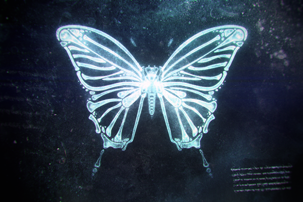 X-ray Butterfly on Behance