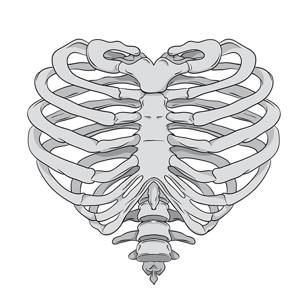 Rib Cage And Flowers Drawing Draw Ribs...374 x 450 46.3kb